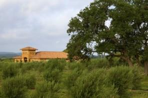 Best Austin Hill Country Boutiques Home Decor Shops