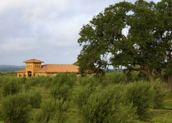 Texas Olive Co Dripping Springs