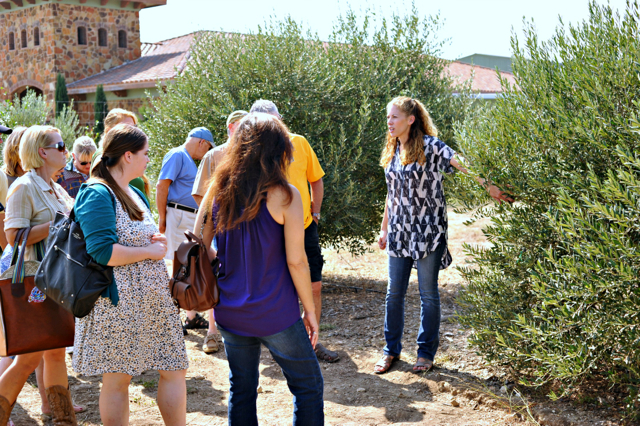olive tours dripping springs